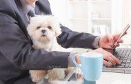 Aller travailler avec son chienpour être moins stressé!